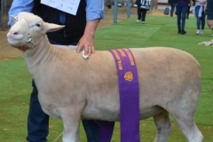 Reserve Champion 2016 with ribbon