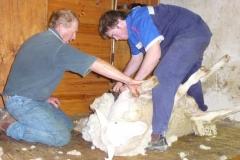 Shearing Peter & Adam