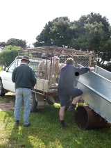 Loading sheep after sale