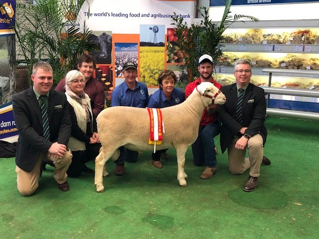 Premier 17P015 purchased in partnership with Dalla family, OrrieCowie for $43,000