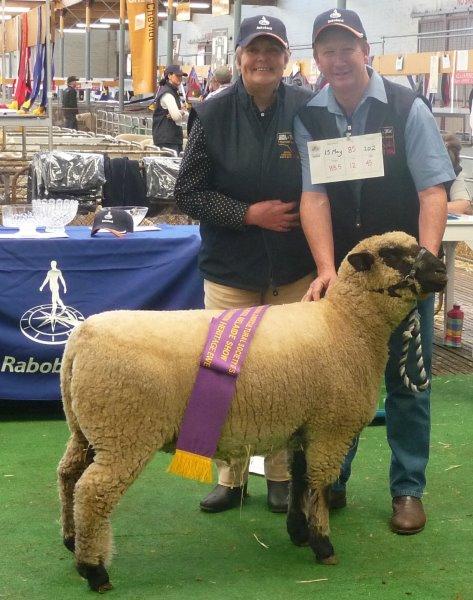 Wooly Hampy ewe